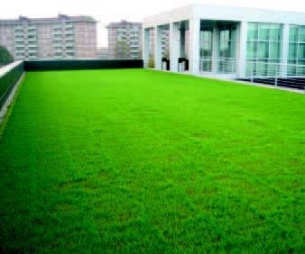tetto verde intensivo leggero